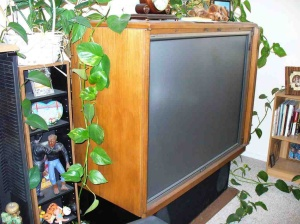 Pregnant: The old school TV